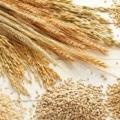 قیمت فروش سبوس گندم خوراک دام و طیور
