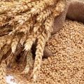 خرید بهترین سبوس گندم خوراک دام بازرگانی کهن
